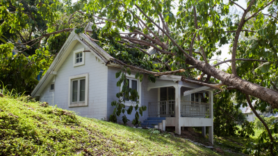 When Your Neighbor's Tree Falls, Who's Responsible?